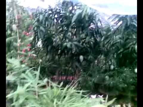 National Tree Exhibition 2011 in Bangladesh.mp4