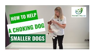 How to Help a Choking Dog - Smaller Dogs