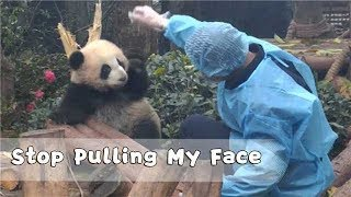 'Stop Pulling My Face. You're Stretching It Big' -- Panda Nina | iPanda