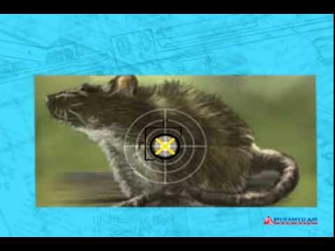 Video: Airgun Academy Episode 21: How to Choose an Air Gun | Pyramyd Air