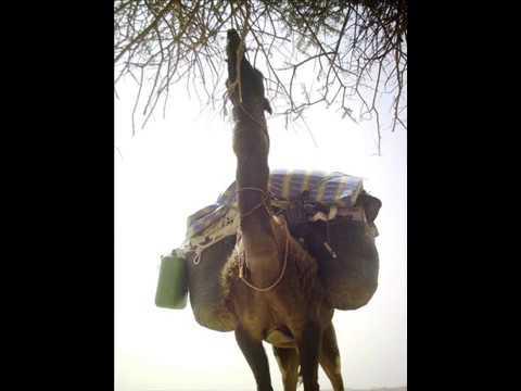 Marocko Safari