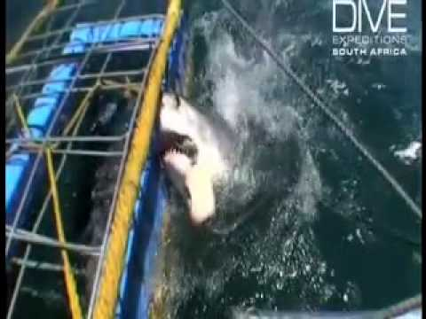 Shark Cage Diving with Snapshot Adventure Tours