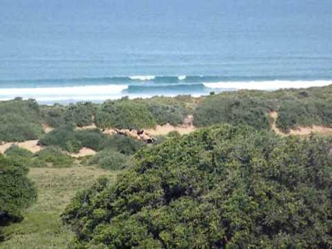www.bluemotion-surfcamp.com