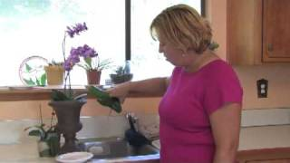 Gardening Tips & Tricks : Growing Orchids Indoors