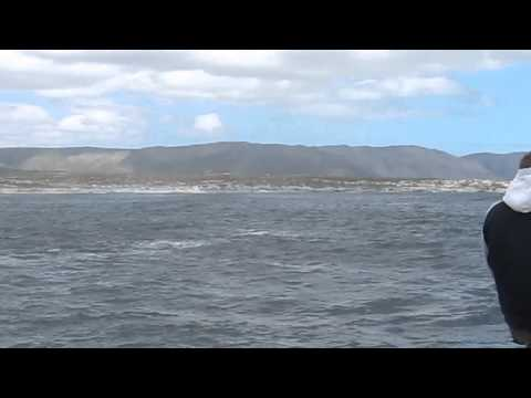 Whale Watching (1) – Hermanus. S. Africa