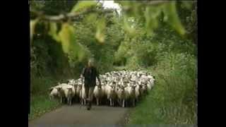 Teletubbies - Herding Sheep