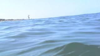 Shark Cam