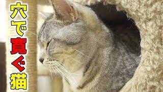 暖かくなって猫の寝床が変わった!猫が穴の中で寛いでいる【猫 かわいい】