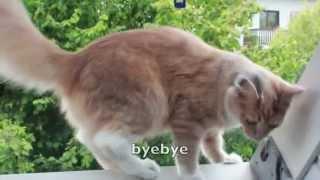 Hello dear Kitty_Amazing Cat_Renovate