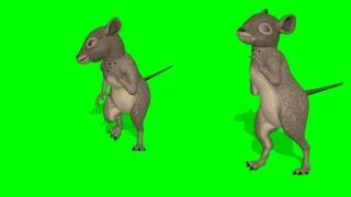 Green screen mouse dancing