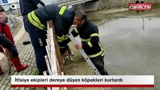İtfaiye ekipleri dereye düşen köpekleri kurtardı!