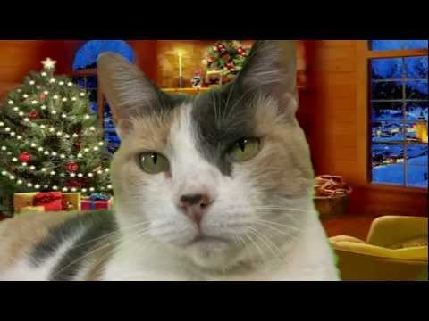 Da Creationist Cat & Kiara Christmas Special!!!