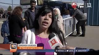 """Micifuz: El gato que viajó desde Venezuela en el vuelo de """"Plan Retorno"""" a Chile"""