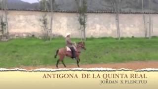 JORDAN DE JN