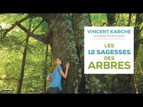 Vidéo de Vincent Karche