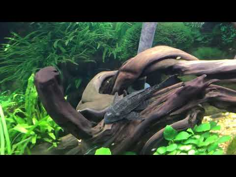 Shrimp Tank Update Number Three