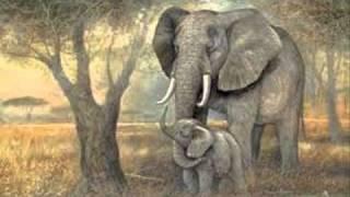 Saint Saens: Carnival of the Animals~L'Elephant (The Elephant)
