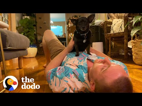 Tiny Rescue Dog Is More Empathetic Than Most People   The Dodo