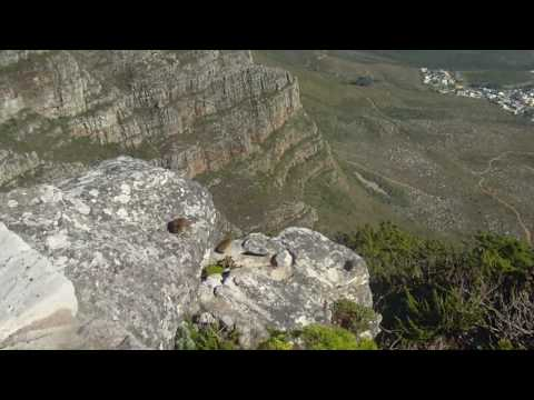 Josh/EJ – Table Mountain in Cape Town, South Africa Hike #34