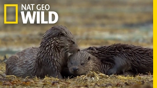 Hungry, Hungry Otters | Destination WILD