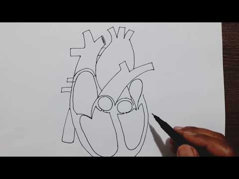 Easy trick to draw Human Heart