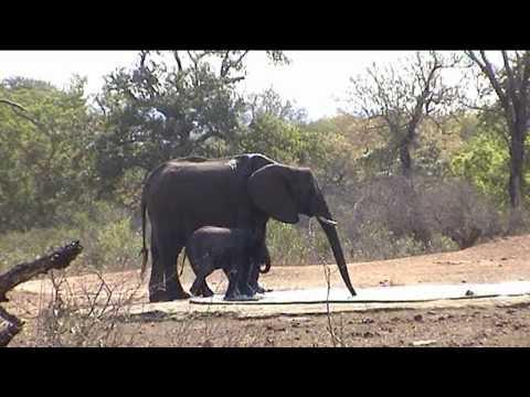 South Africa, the Kruger park. Sudafrica, il parco Kruger.