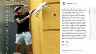 Time da Venezuela suspende jogadores por maus tratos a animais