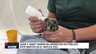El Zoológico de Naples presentara a sus nuevos residentes