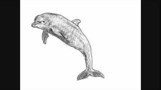 delfin bilder zum abzeichnen
