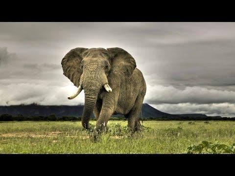 A Dozen of Addo Park Elephants