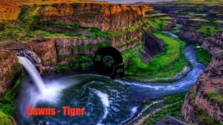 Dawns - Tiger