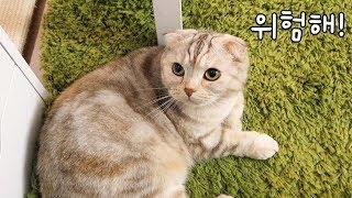 고양이 라온이를 안전한 곳으로 유인하라!