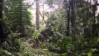 Sons da Natureza, Linha 40 - a chuva nas árvores...