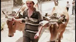 Manuel Guillen y su Orq. Nueva Sangre - SOY GUANACO live montreal