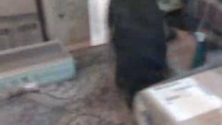 Roxi's skunk