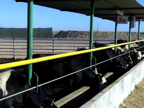 U.S. Grains Council – Corn Mission – Morocco Feedlot