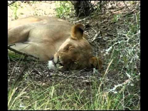 The Bush Lodge – Amakhala Game Reserve – South Africa
