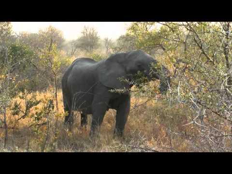 SafariSouthAfrica