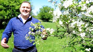 AUGUSTIN IANCU  ►►► AZI LA NUNTA-I VESELIE   |  OFFICIAL MUSIC VIDEO  ®