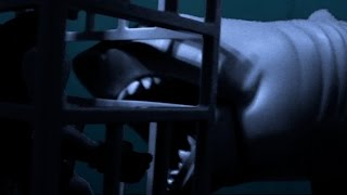 "Jaws ""Hooper In The Cage"" Reenactment"
