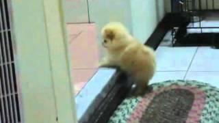 Filhote fofo de cachorro tentando subir degrau