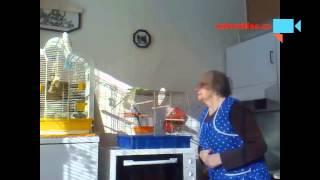Ochočený papoušek a sprostá babička.