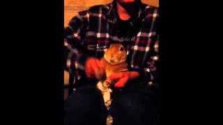 Beatbox Bunny