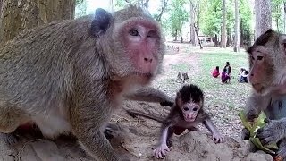 Monkey mom protect newborn baby