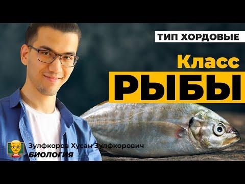 Тип хордовые. Класс хрящевые и костные рыбы.