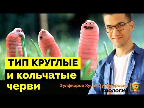 Тип круглые черви и кольчатые черви