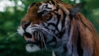 Face To Face With A Tiger - In The Forest Of The Night - Doctor Who - BBC
