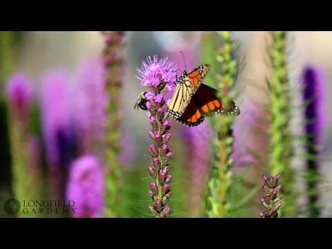 Summer Flowers That Attract Butterflies