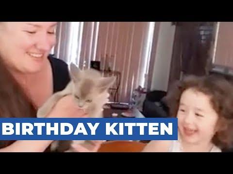 Birthday Kitten