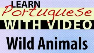 Learn Brazilian Portuguese with Video - Wild Animals